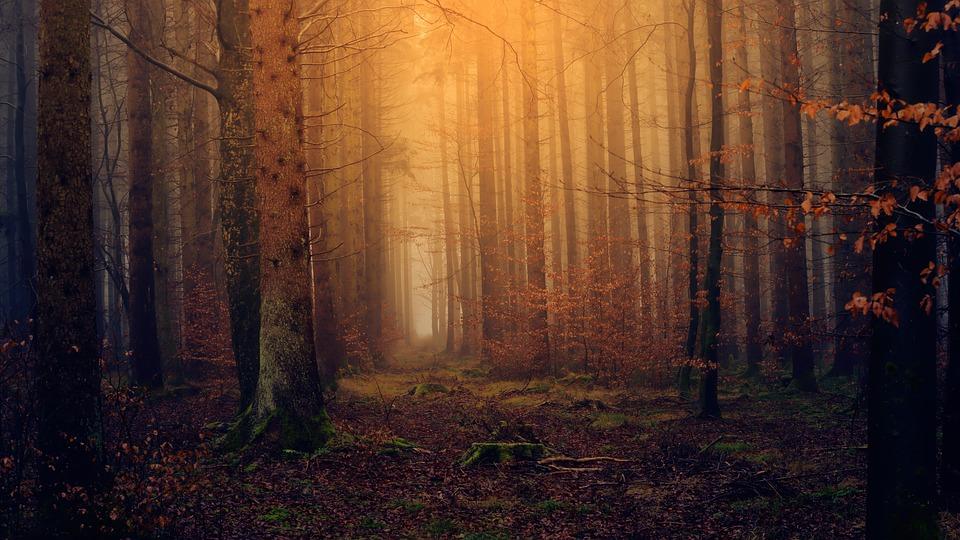 5 paisajes de otoño que no debes perderte en tu viaje a Navarra