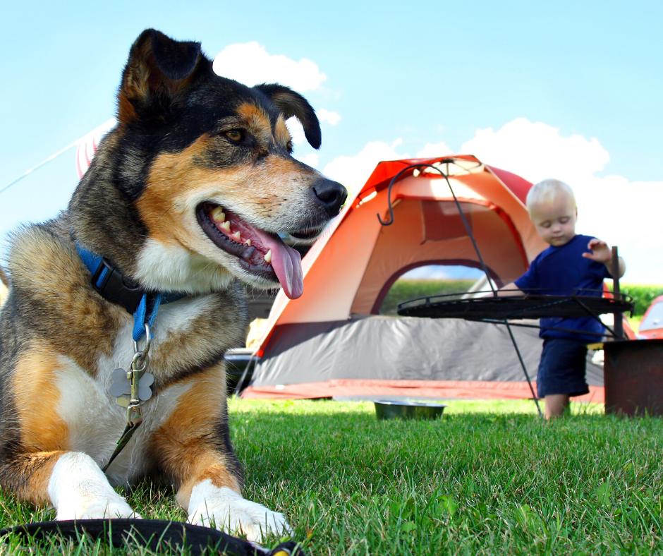 Mascota camping