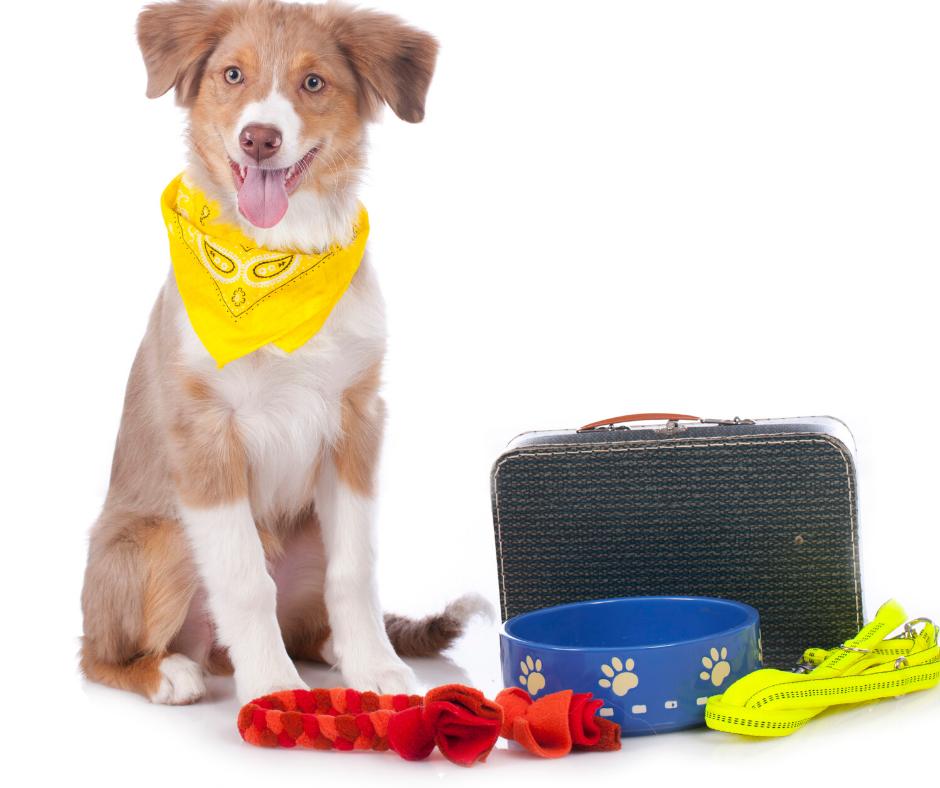 Consejos para viajar de camping con vuestras mascotas este invierno