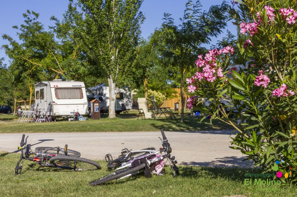 reapertura camping