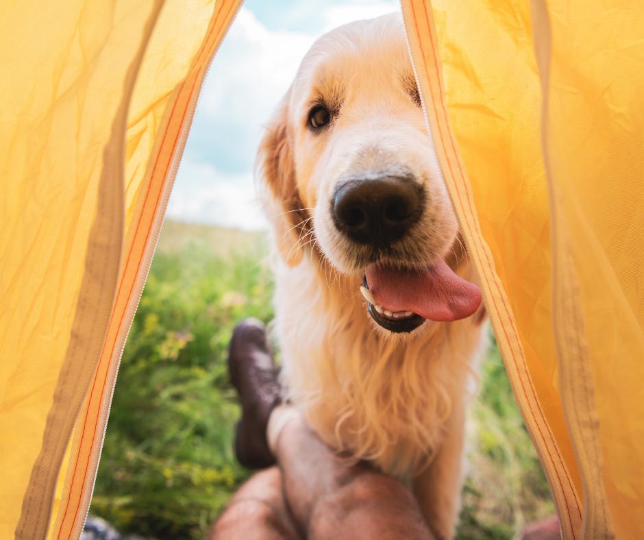 Alarga el verano y vete de camping