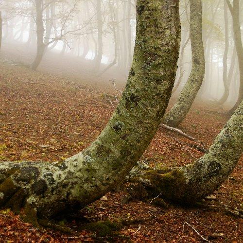 Como descubrir la fauna y flora en Tierras de Iranzu